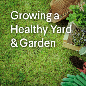 Growing a Healthy Yard and Garden