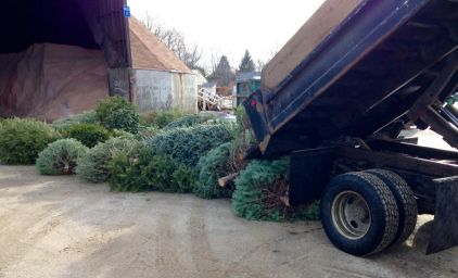 Christmas Tree Collection.jpg